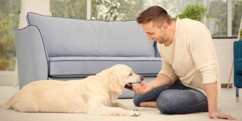 4 Ways to Stop Dogs From Scratching the Carpet, Lexington-Fayette Central, Kentucky