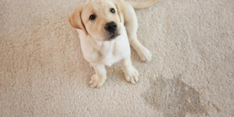 3 Tips to Keep Your Dog From Peeing on the Carpet, Arlington, Texas