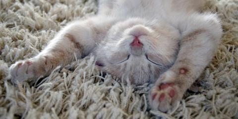 Carpet Care Experts Reveal 3 Types of Dirt Hiding in Your Flooring , Columbus, Ohio
