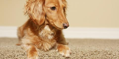 How Often Should I Get My Dog's Nails Trimmed?, Churchville, New York
