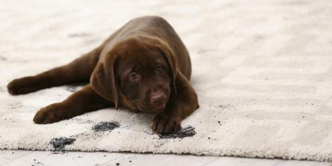 3 Tips for Removing Pet Stains From Carpet, Foley, Alabama