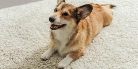 How to Protect Carpets From Pet Damage, Lincoln, Nebraska