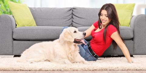 3 Essential Carpet Cleaning Tips for Pet Owners, Walton, Kentucky