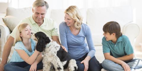 The Dangers of Pet Urine in Your Carpet, Lincoln, Nebraska