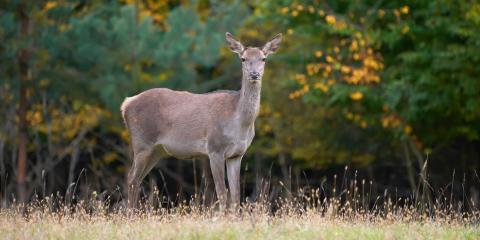 5 Tips for Successfully Hunting Deer, Carrollton, Kentucky