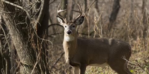 Local Gun Shop Gives 5 Tips for New Deer Hunters, Carrollton, Kentucky