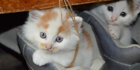3 Important Preparation Tips for Pet Adoption, Foley, Alabama