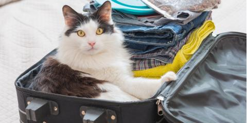 Top 5 Cat Boarding Tips, Newport-Fort Thomas, Kentucky