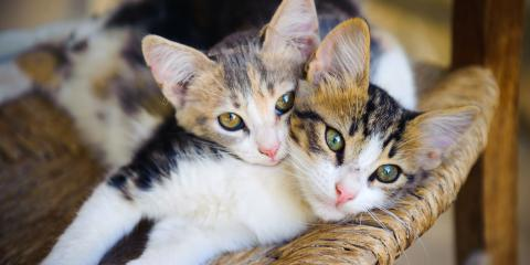 3 Signs Your Cat May Want Friends, Honolulu, Hawaii
