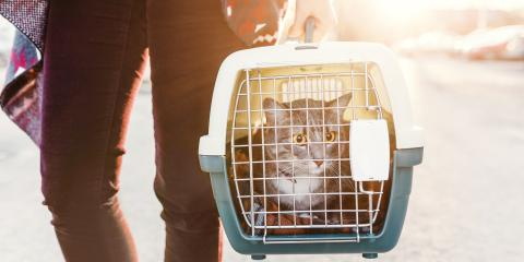 How Can You Prepare Your Cat for Pet Boarding?, Nicholasville, Kentucky