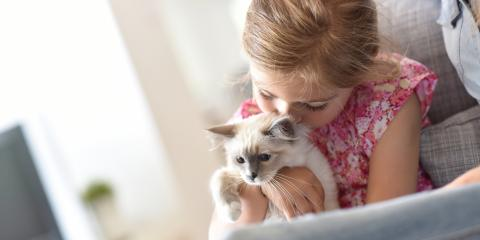 3 Cat Grooming Tips for New Owners, Newport-Fort Thomas, Kentucky