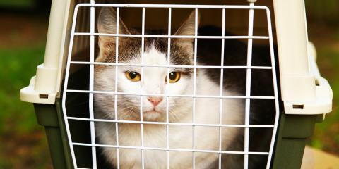 A Guide to Getting a Cat Into a Carrier, ,