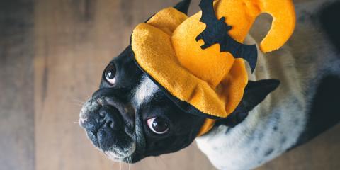 Pet Halloween Costume Safety Tips, Green, Ohio