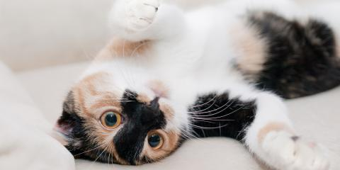 5 Ways to Help Your Cat Lose Weight This Year, Manhattan, New York