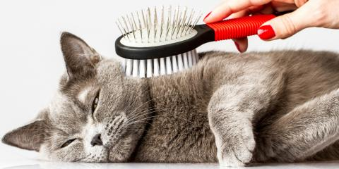 Give Your Feline a Fresh Start With Cat Grooming, Miami, Ohio