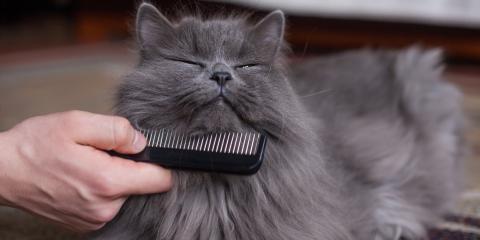 How Do I Fix My Cat's Matted Fur? , Lincoln, Nebraska