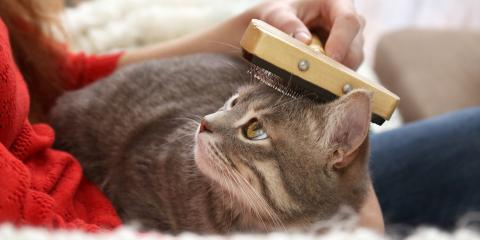 A Pet Owner's Guide to Cat Grooming, Lincoln, Nebraska