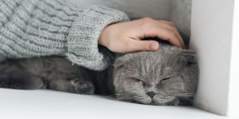 Your Guide to Professional Cat Grooming, Lincoln, Nebraska