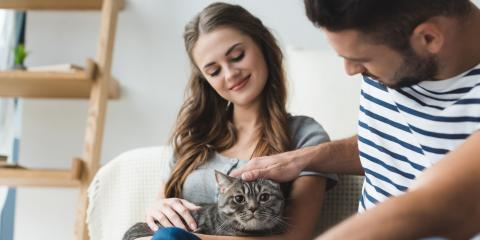 What Pet Owners Should Know About Cat Vaccinations, Russellville, Arkansas