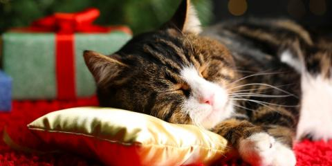 Holiday Pet Hazards To Avoid , Penfield, New York