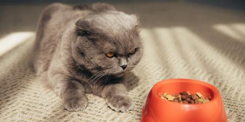 4 Signs Your Cat Should See a Veterinarian, Sanford, North Carolina