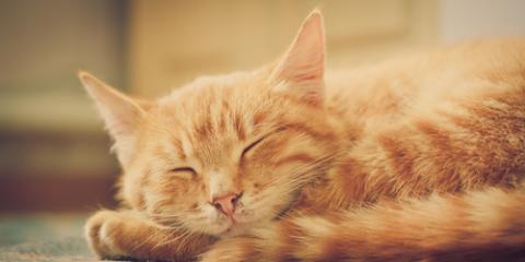 Cat Grooming Tips for Healthy Nails & Paws, Lincoln, Nebraska