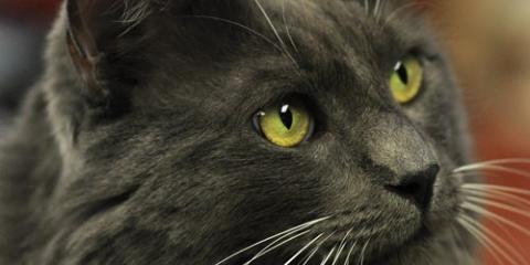 Pet Cancer: Dog & Cat Health Tips, Port Orchard, Washington