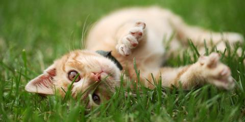 3 Common Illnesses in Outdoor Cats, Lincoln, Nebraska