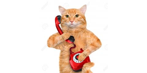 Call Steve Boyle State Farm for an insurance quote and they will donate $8 to Nutmeg Spay/Neuter Clinic!, Stratford, Connecticut