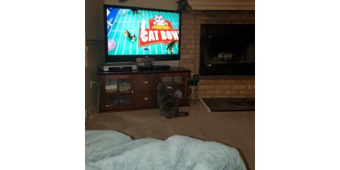 Cat watching the Cat Bowl, Roswell, New Mexico