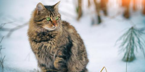 Ask a Pet Boarding Pro: 3 Tips for Keeping Outdoor Cats Safe During the Winter, Newport-Fort Thomas, Kentucky