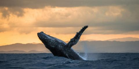 3 Things to Know Before Setting Out on a Whale Watching Tour, Ewa, Hawaii