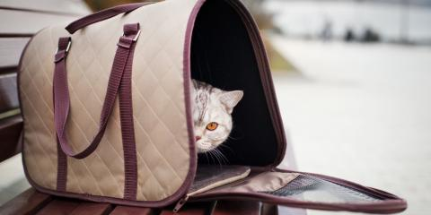 4 Tips for Road-Tripping With Your Pet, Lincoln, Nebraska
