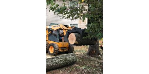 Cutting Dangerous and Damaged Trees After Storms, Providence, North Carolina