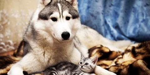 Get 10% off Spaying or Neutering for the month of July, Montgomery, Ohio