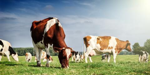 4 Benefits of a Cattle Guard, West Plains, Missouri