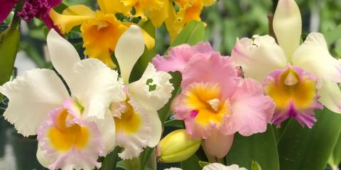 Do's & Don'ts of Orchid Care, ,
