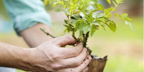 Do You Need Professional Tree Care? , Center City, Minnesota