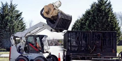 When Should You Schedule Professional Tree Removal?, Center City, Minnesota
