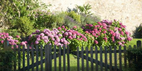 5 Shady Flowers to Plant for Landscape Maintenance, Centerville, Ohio