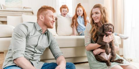 4 Ways a New Pet Affects Your HVAC System, 10, Louisiana