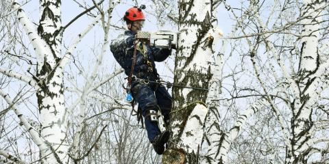 4 Reasons to Hire a Certified Arborist for Your Trees, Commerce, Georgia