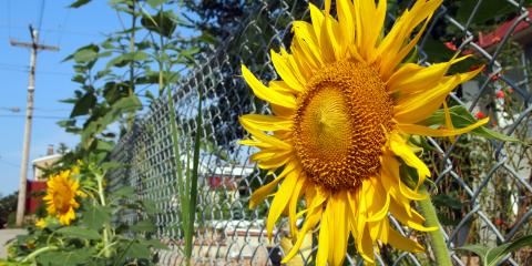 Top 3 Reasons toConsider Chain Link Fencing for Your Home, Tomah, Wisconsin