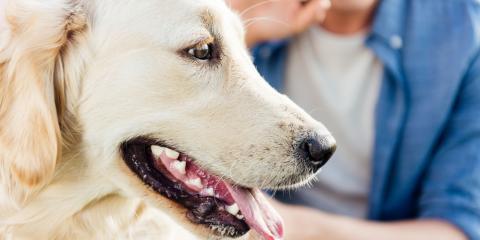 A Guide to Dog Bite Law in Ohio, Chardon, Ohio