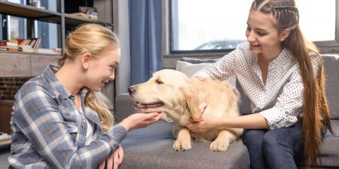 Why Pet Microchipping Is Essential, Kabletown, West Virginia