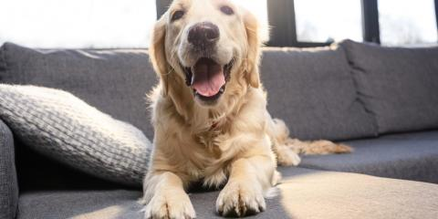 4 Pet Wellness Tips to Keep Your Pet Comfortable in the Summer, Kabletown, West Virginia