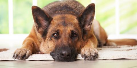 Carpet Cleaning Tips: 3 Sources of Pet Odors, Stevens Creek, Nebraska