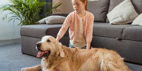 4 FAQ About Seasonal Pet Allergies, Elkton, Maryland
