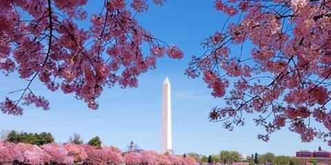 National Cherry Blossom Festival 2016 – Save On Parking!, Arlington, Virginia