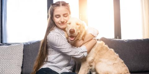 5 Misconceptions About Pet Allergies, Chesterfield, Missouri